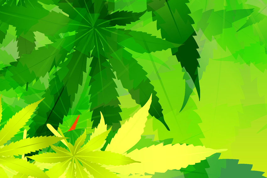 CANNABIS TRENDS YOU NEED TO KNOW: Corey Mangold Reveals Industry-Wide Changes That Will Affect Your Portfolio